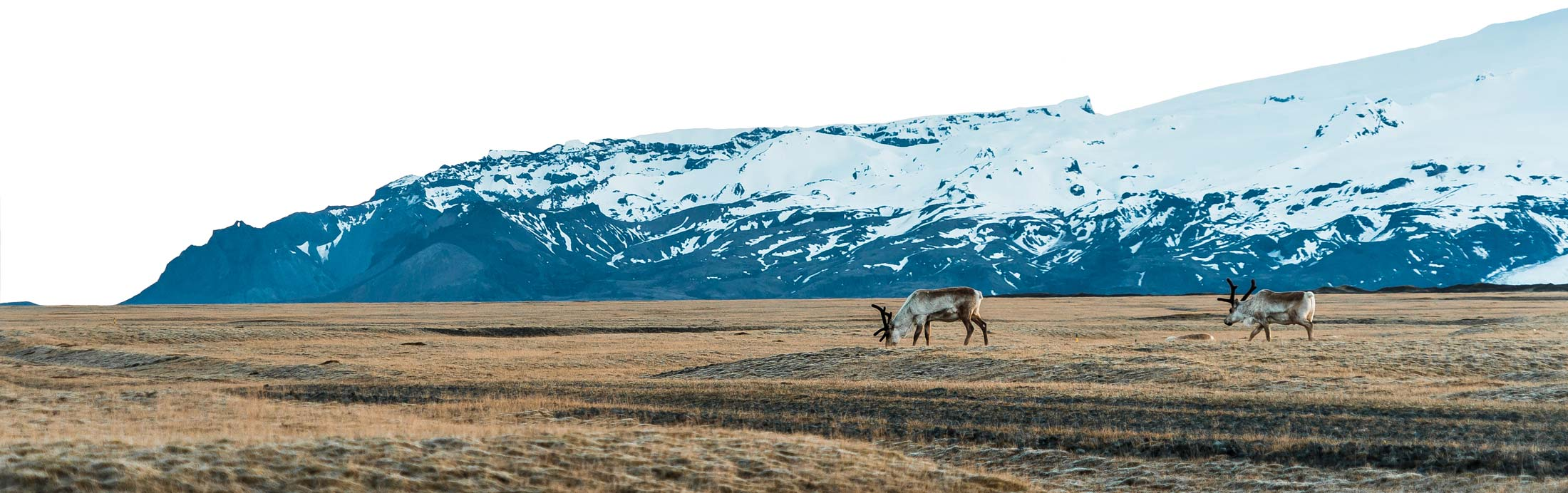 Reindeer on Iceland, available in Iceland Sneak Peek collection