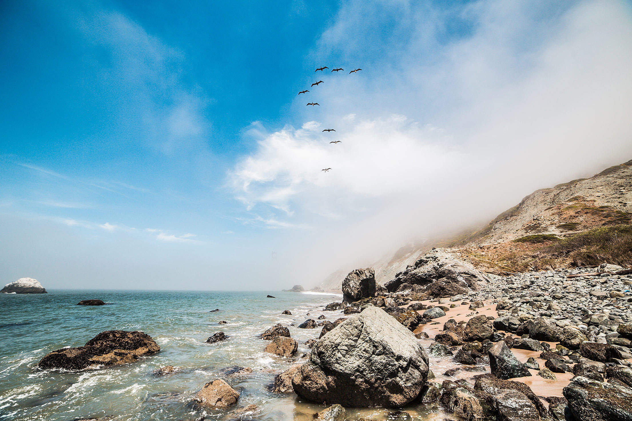 9 Birds Flying Along The Ocean Shoreline Free Stock Photo