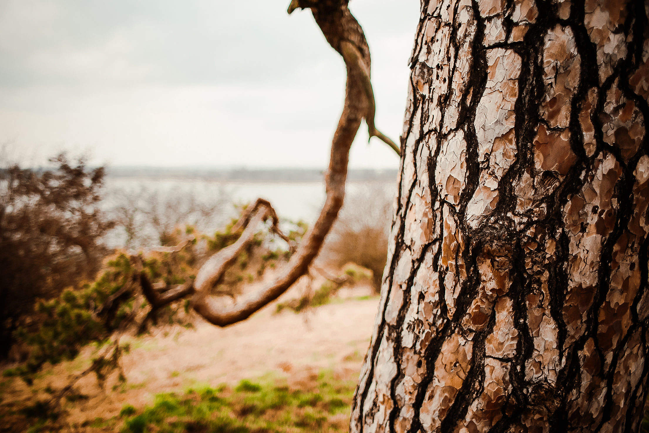 A Conifer Tree Trunk Close Up Free Stock Photo