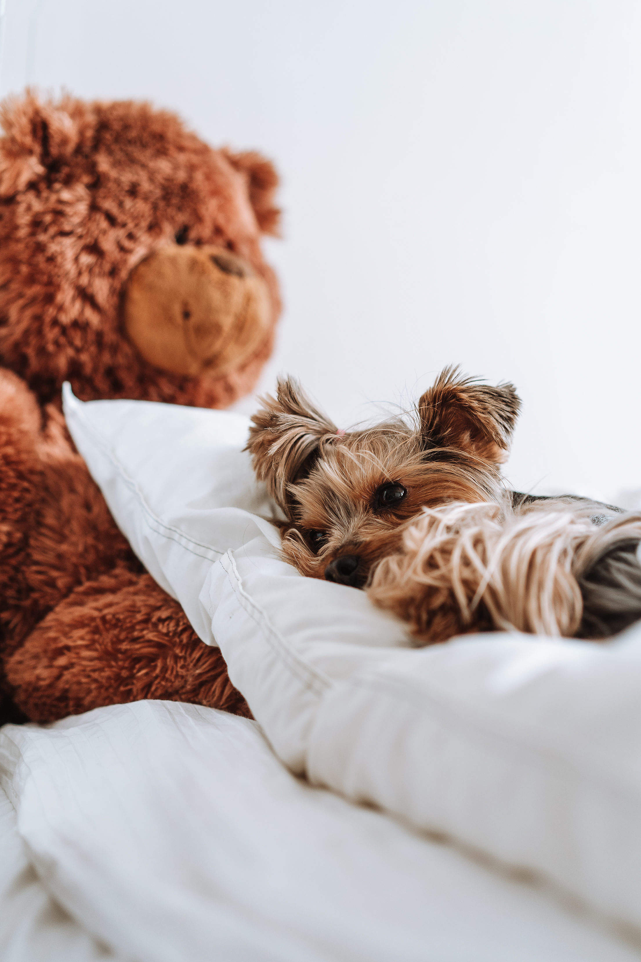 A Dog Lying on a Large Pillow in The Bed Free Stock Photo