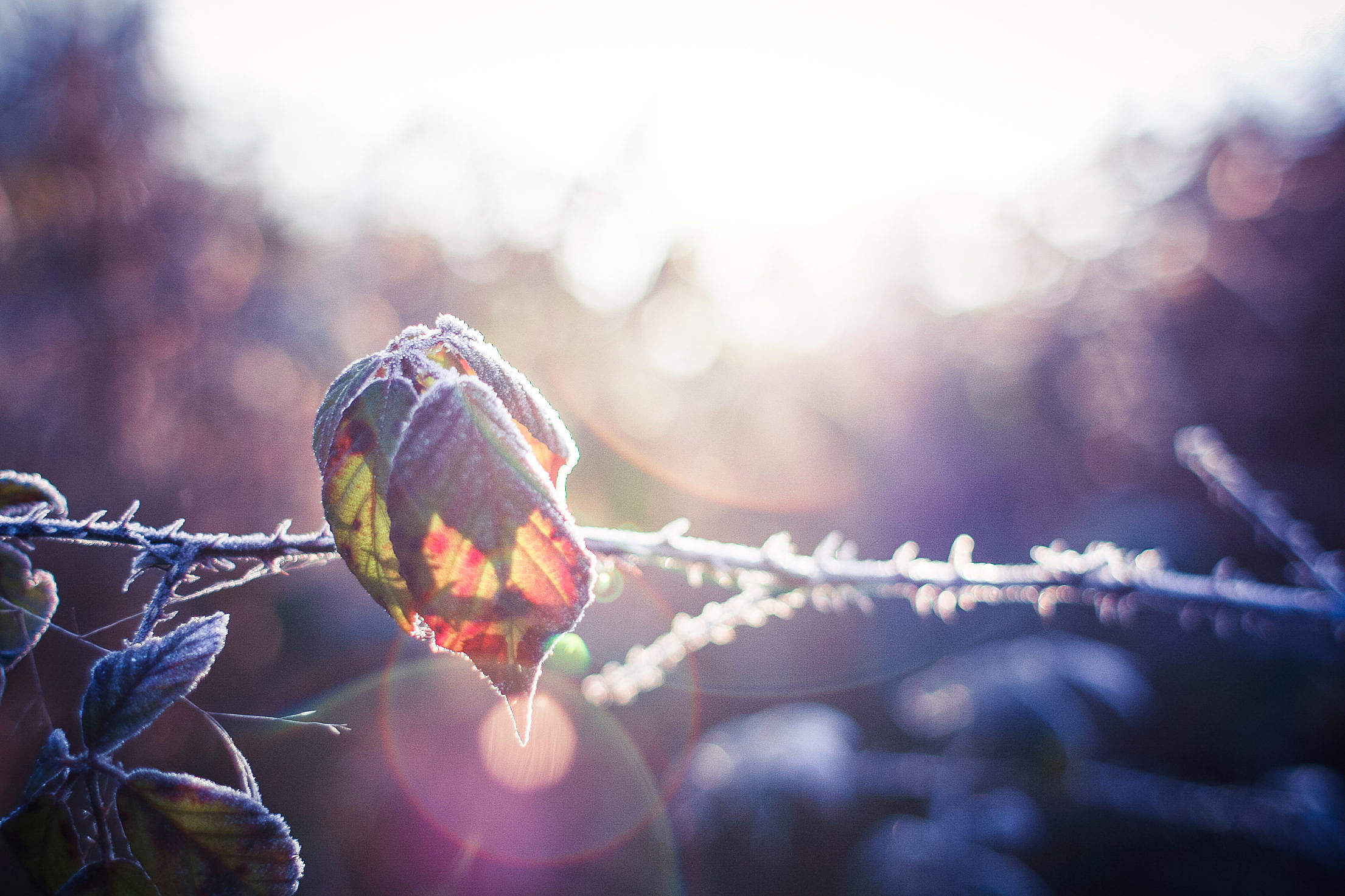 A Leaf in Morning Dew Free Stock Photo
