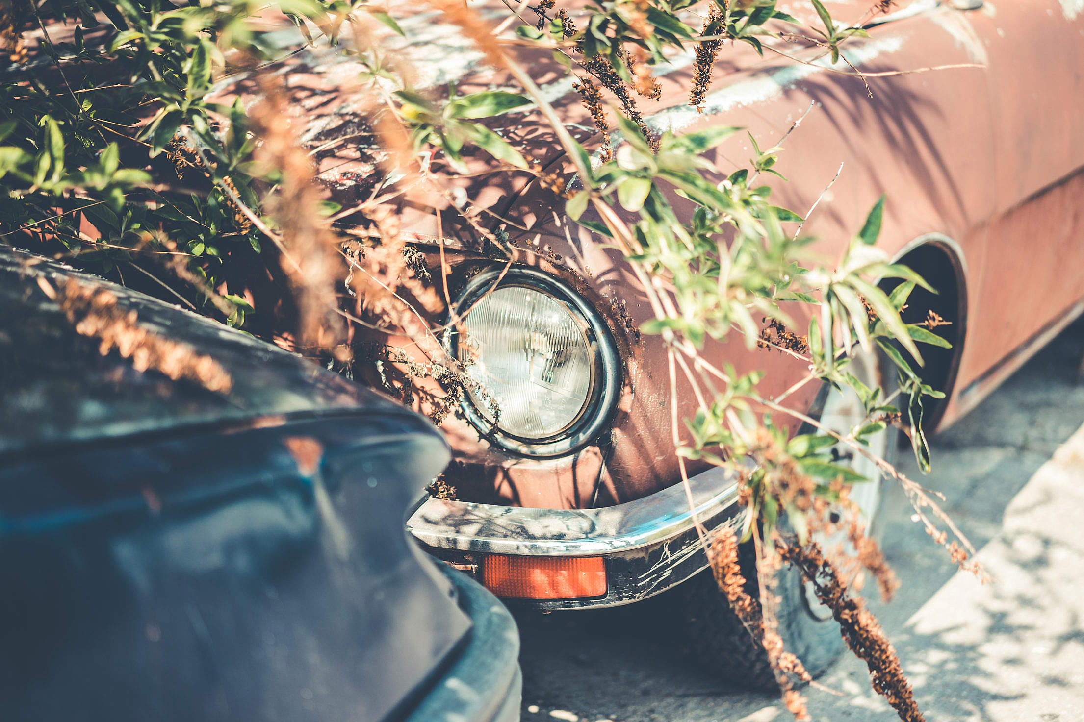 Abandoned Rusty Old Timer Automobile Free Stock Photo