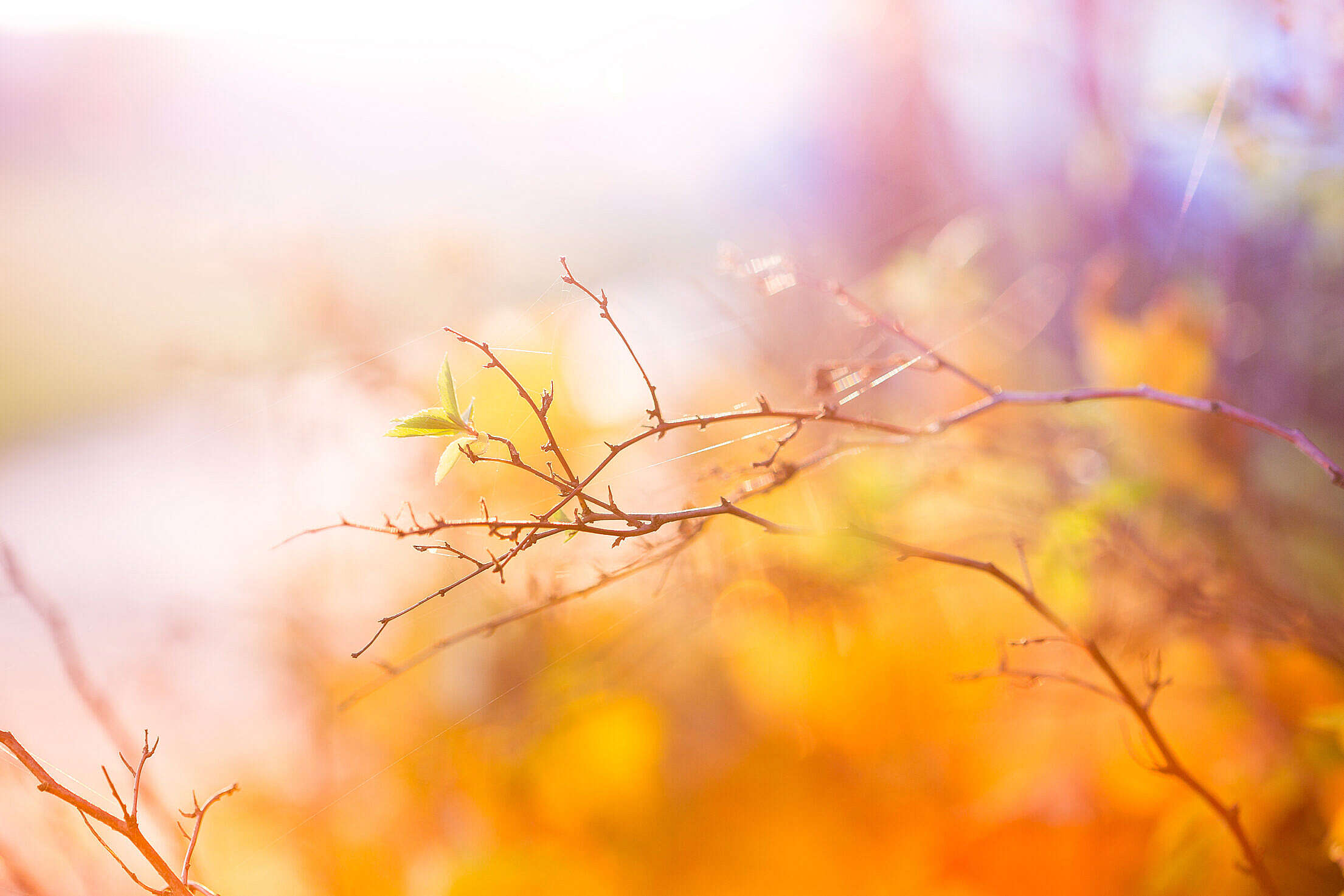 Abstract Colors of Autumn Free Stock Photo