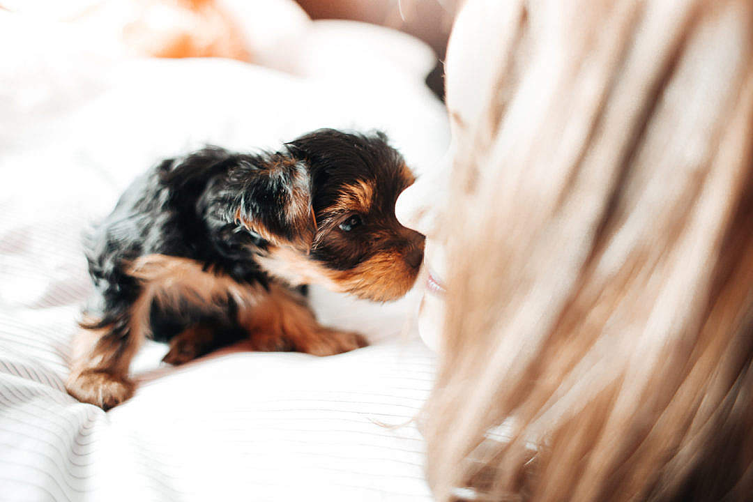 Download Adorable Puppy Licking Young Woman's Face FREE Stock Photo
