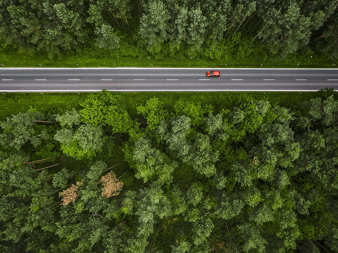 Download Aerial and Symmetric View of a Road in the Woods FREE Stock Photo