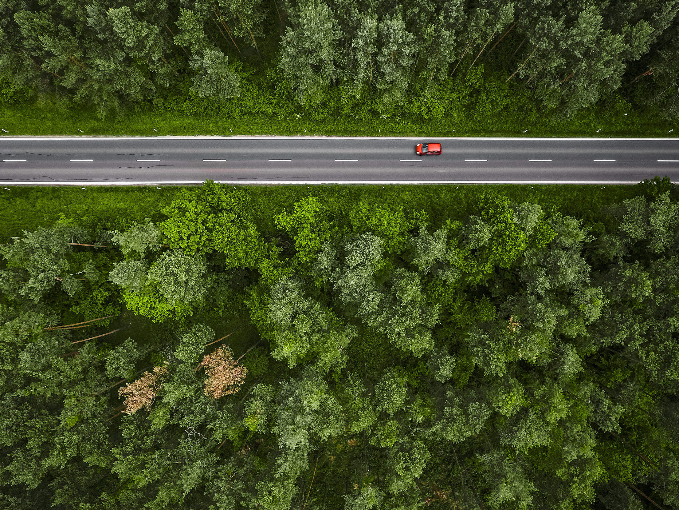 Aerial and Symmetric View of a Road in the Woods Free Stock Photo