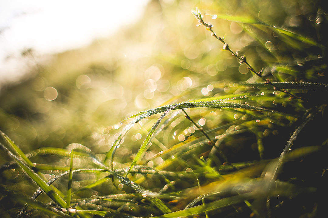 Download Another Sunny Morning Grass Shot FREE Stock Photo