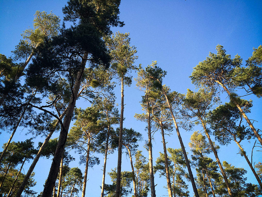 Download Another Trees in the Forest FREE Stock Photo