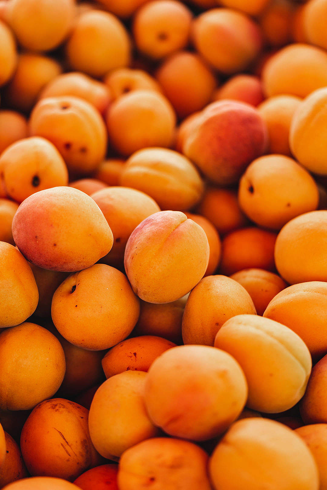 Download Apricots FREE Stock Photo