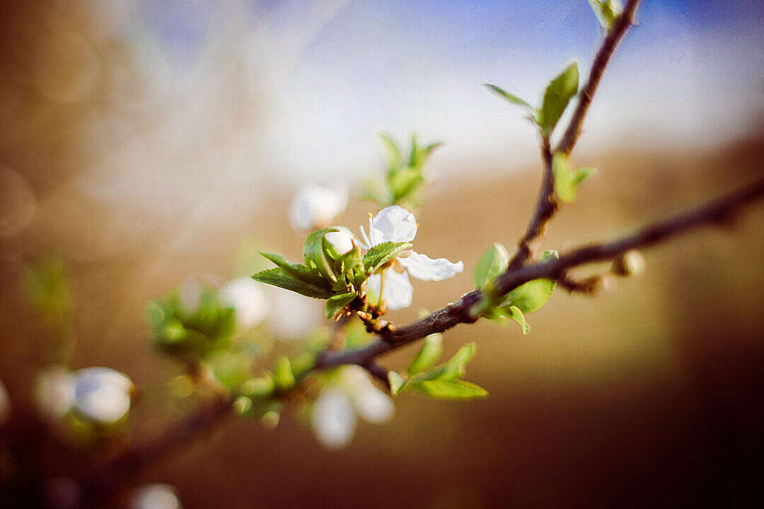 Download Are you prepared for spring? FREE Stock Photo