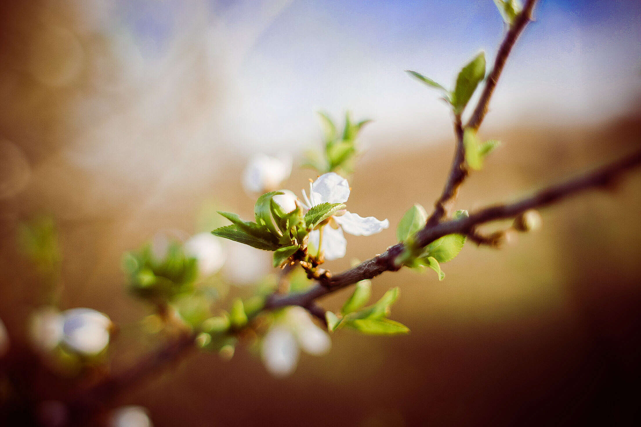 Are you prepared for spring? Free Stock Photo