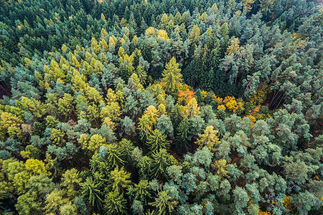 Download Autumn Forest From Above FREE Stock Photo