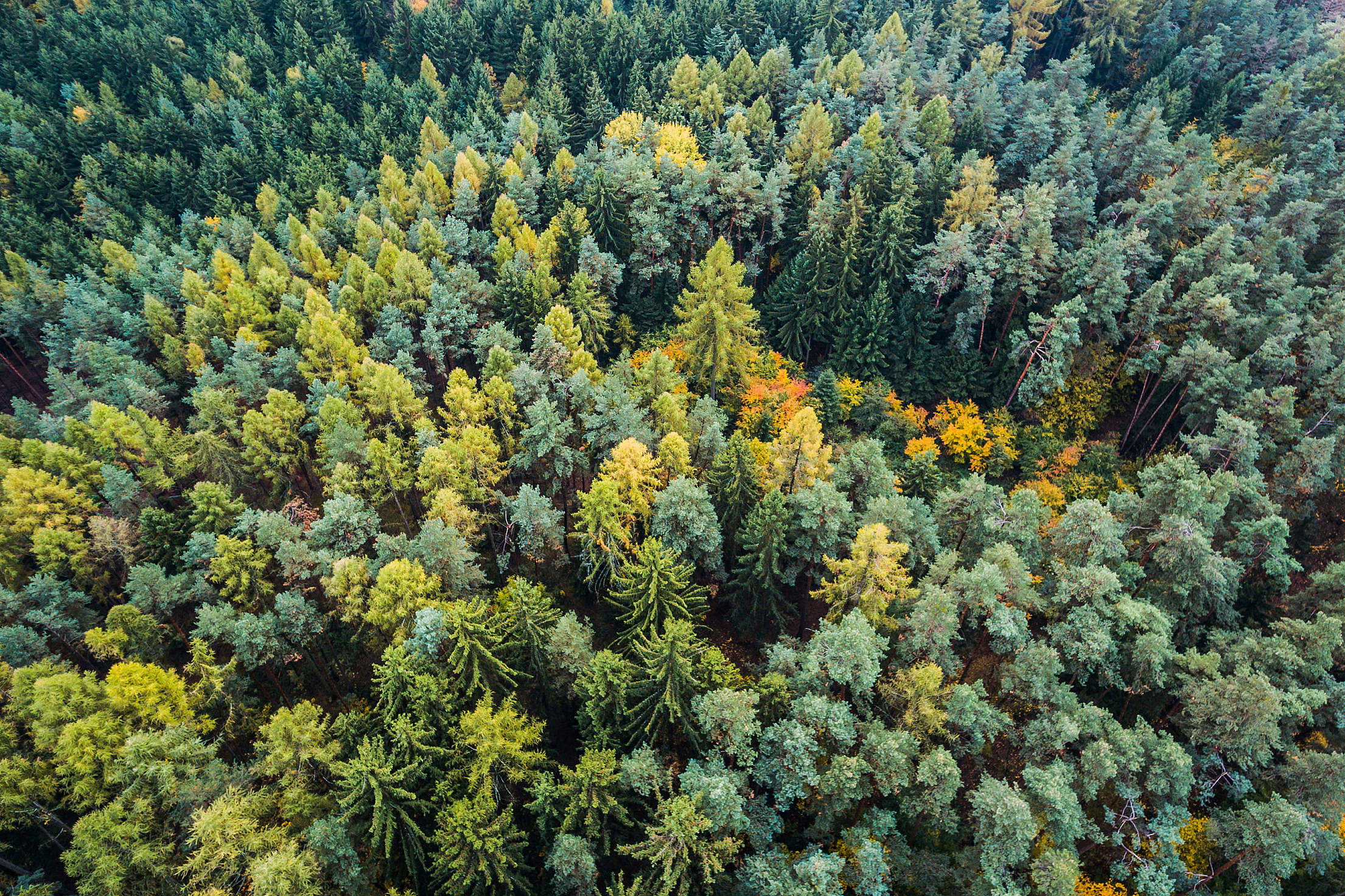 Autumn Forest From Above Free Stock Photo
