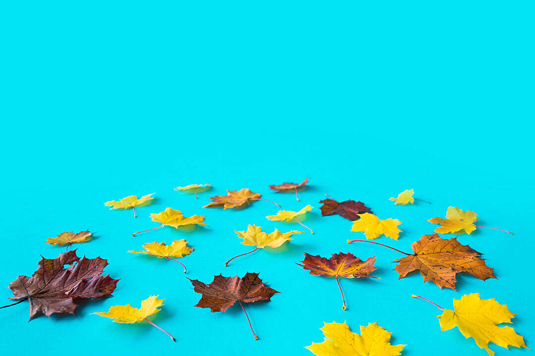 Download Autumn Leaves Flat Perspective with Room for Text FREE Stock Photo