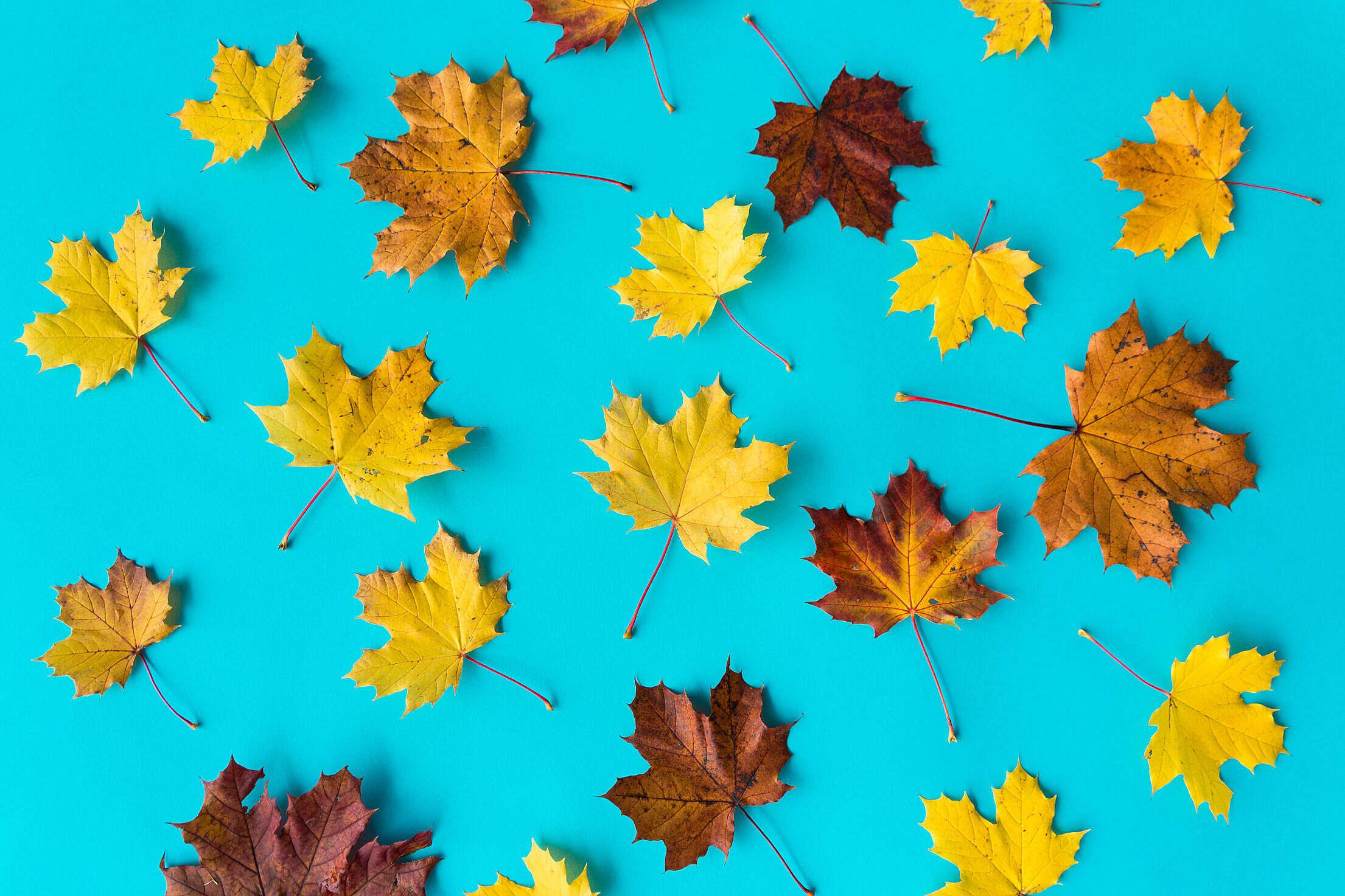 Autumn Leaves on Flat Blue Background #2 Free Stock Photo