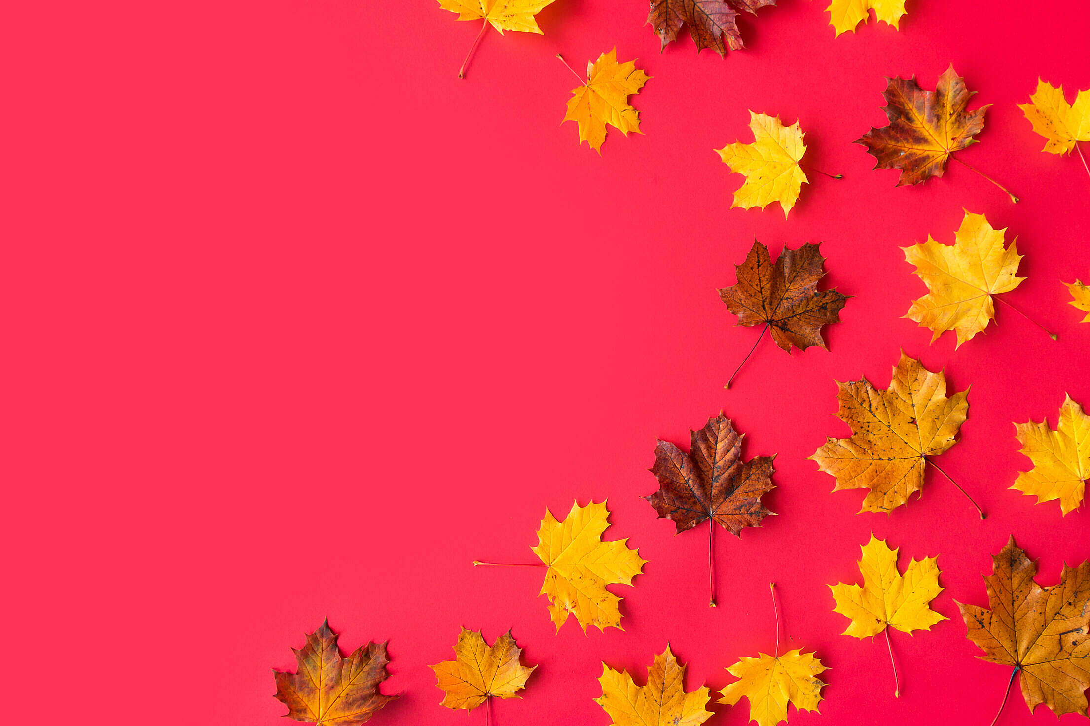 Autumn Leaves on Flat Red Background with Room for Text #2 Free Stock Photo