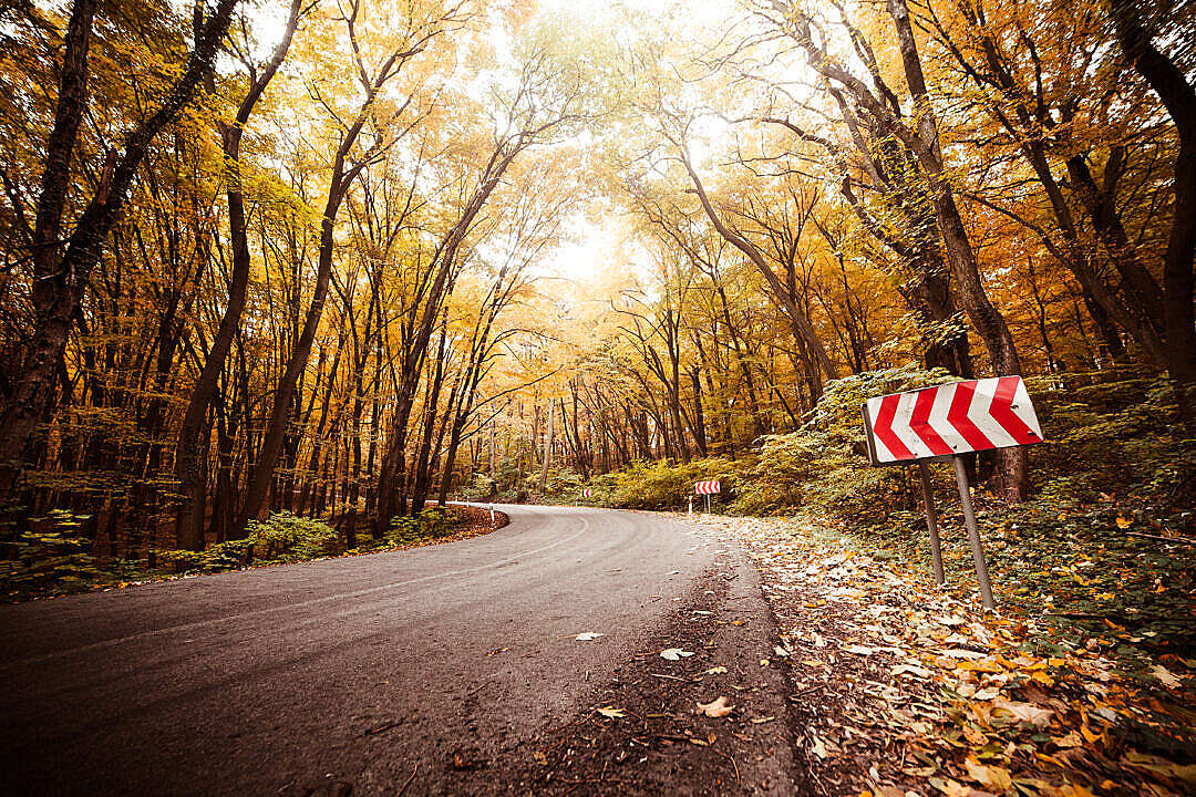 Download Autumn Long Curved Road FREE Stock Photo