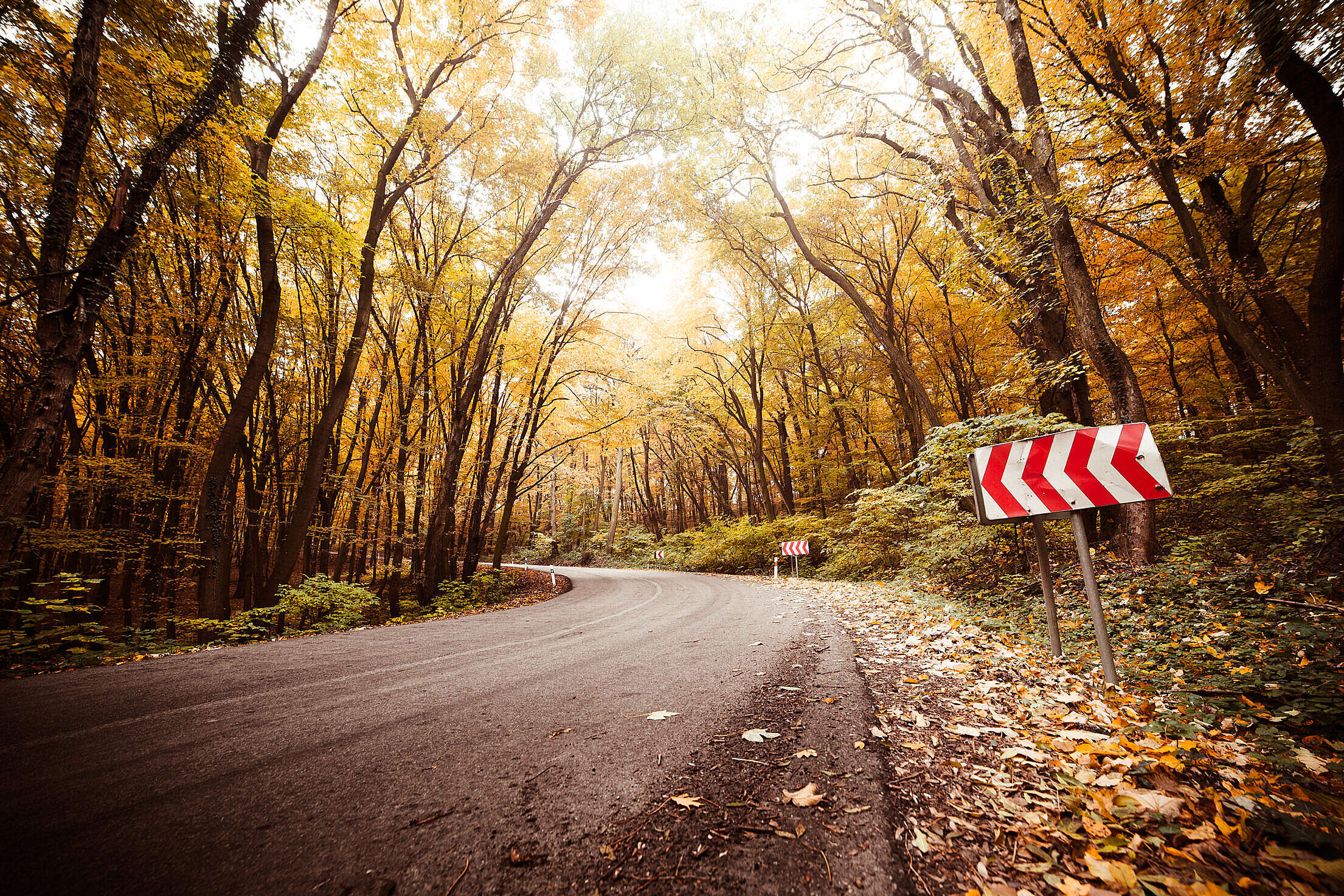 Autumn Long Curved Road Free Stock Photo