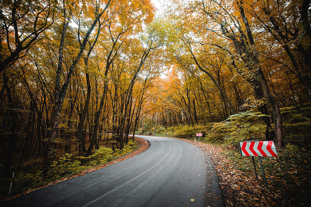 Download Autumn Road Through The Forest FREE Stock Photo