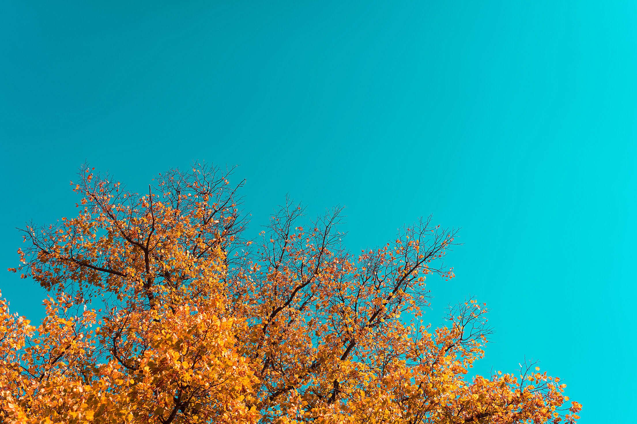 Autumn Tree Free Stock Photo