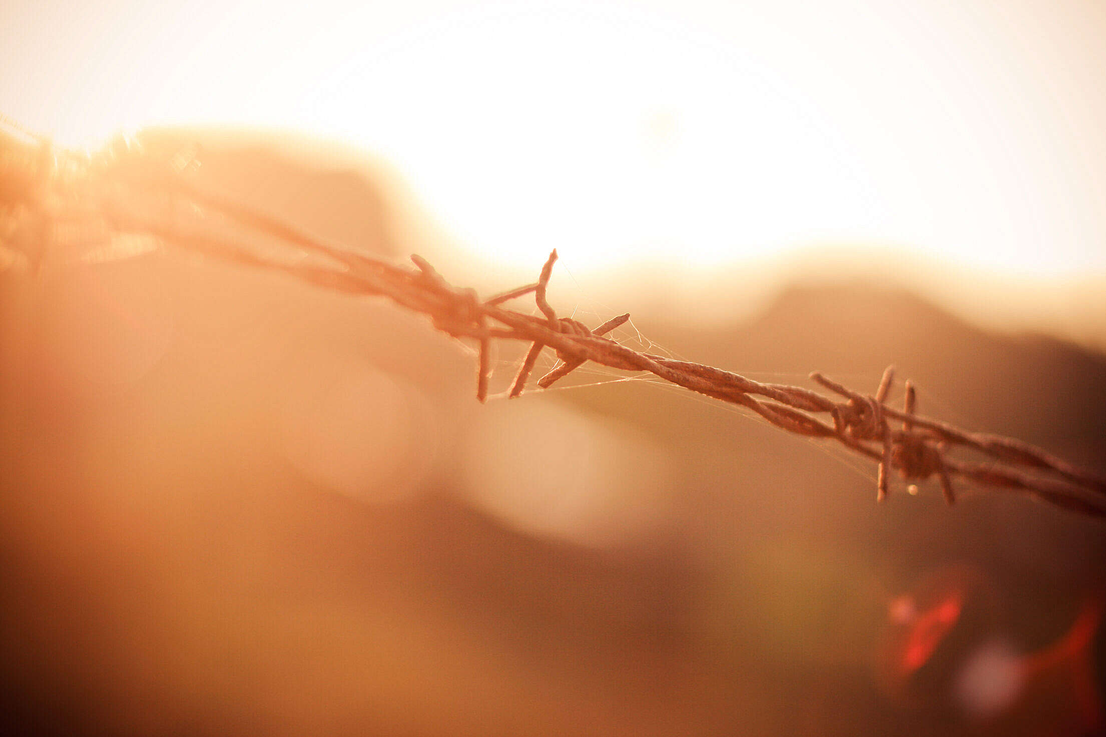 Barbed Wire in Sun Free Stock Photo