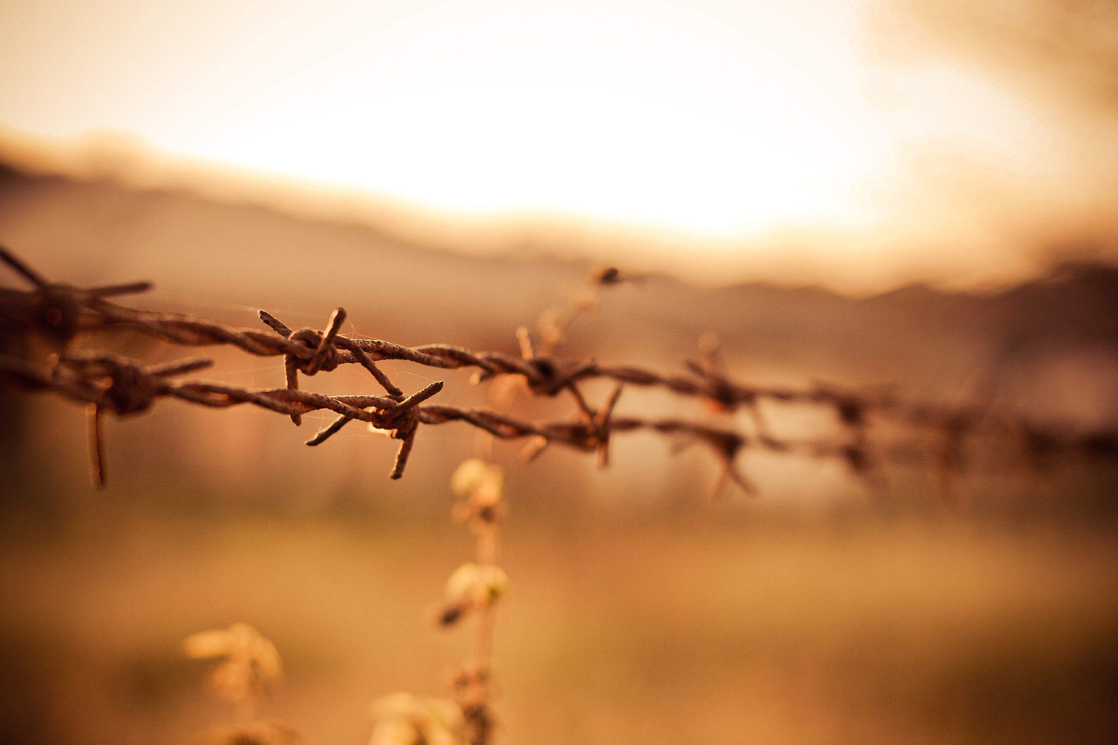 Barbed Wires Free Stock Photo