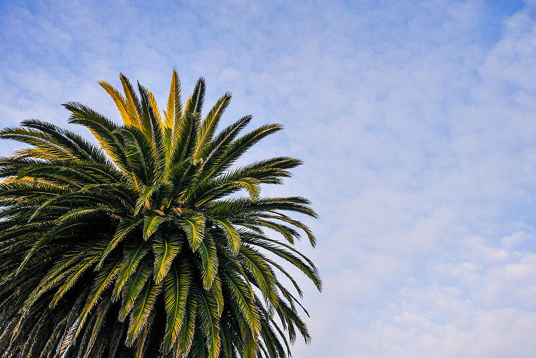 Download Beach Palm Tree with Cloudy Sky FREE Stock Photo