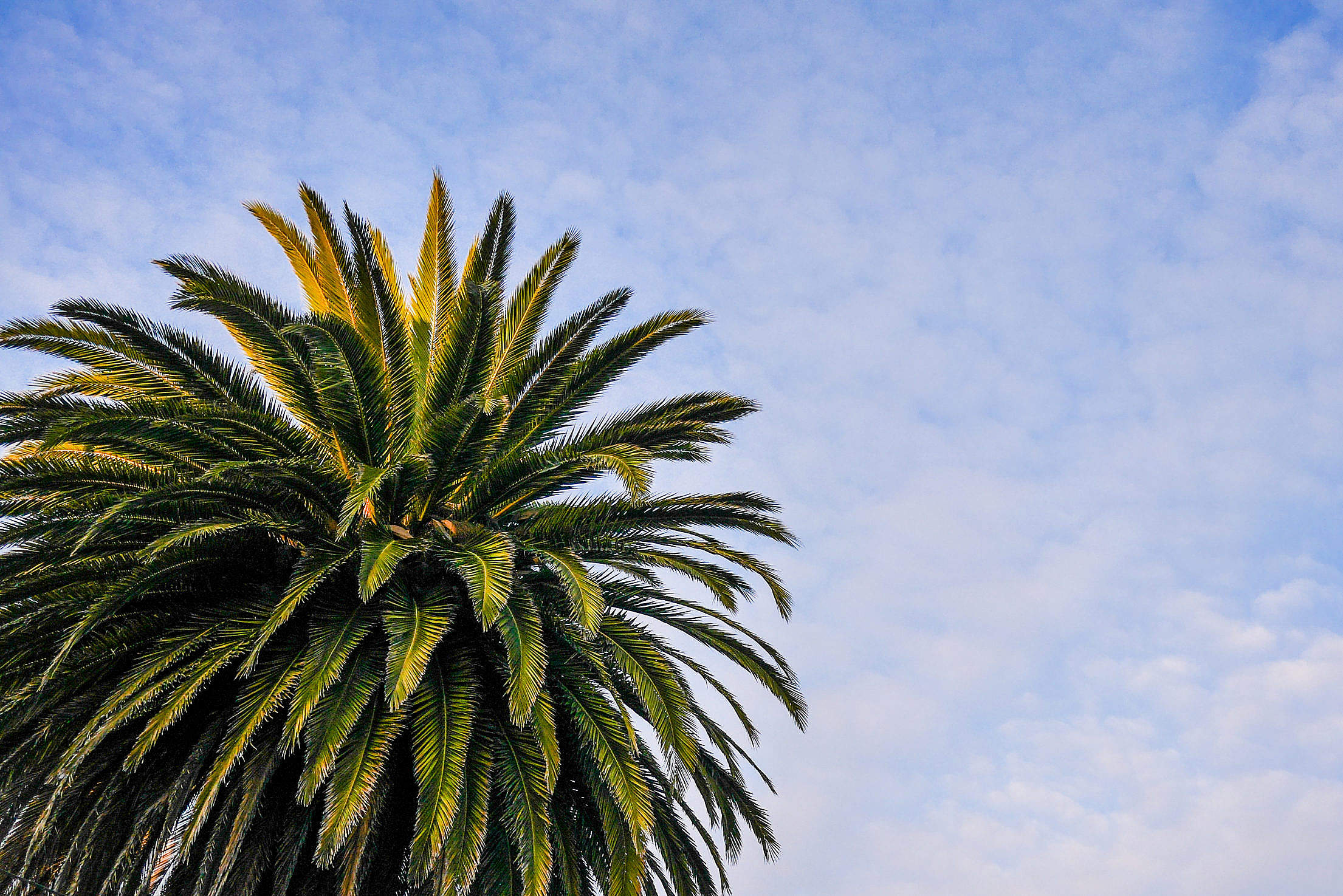 Beach Palm Tree with Cloudy Sky Free Stock Photo