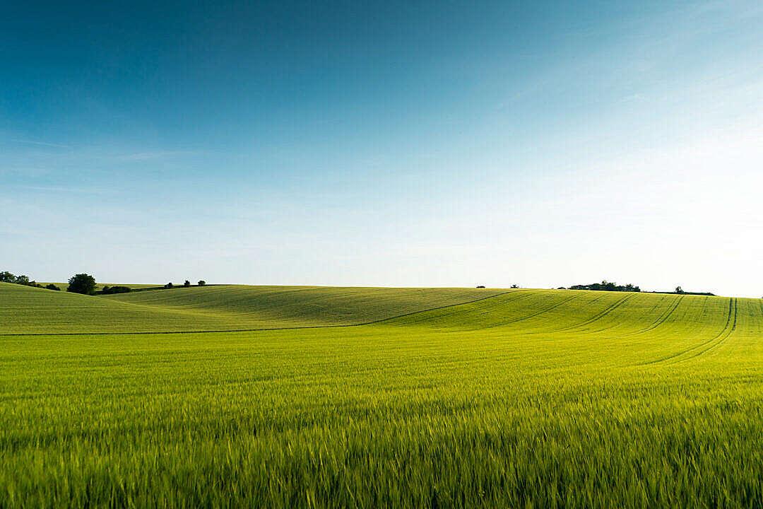 Download Beautiful Green Field Scenery FREE Stock Photo