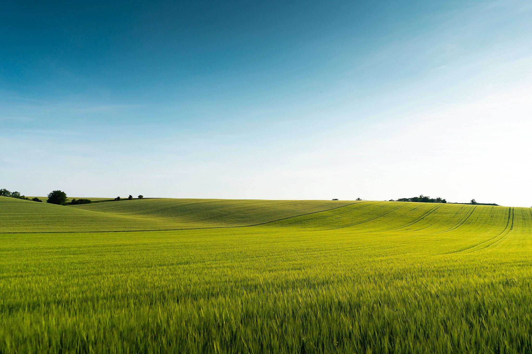 Beautiful Green Field Scenery Free Stock Photo