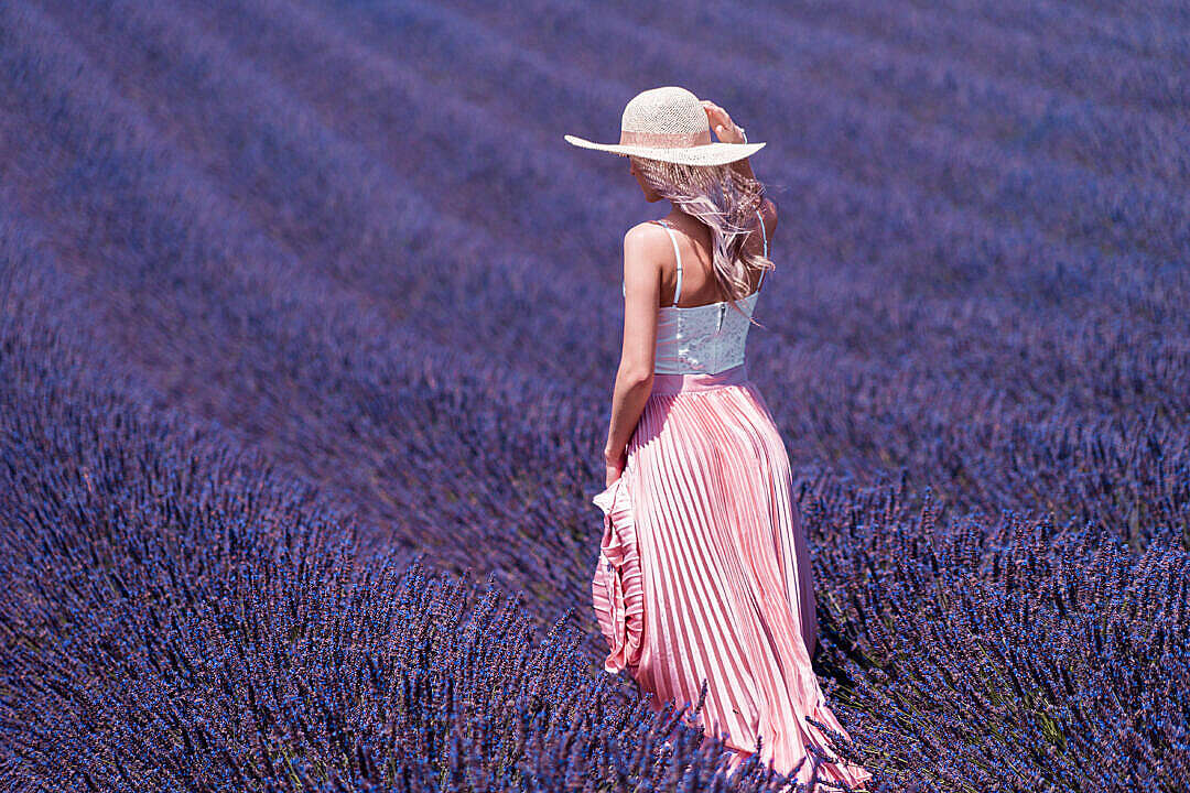 Download Beautiful Lavender Field FREE Stock Photo