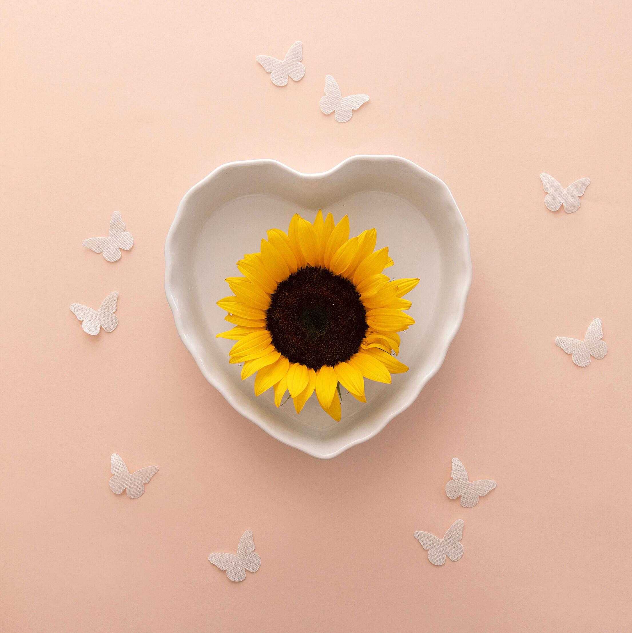 Beautiful Sunflower Flat Lay Free Stock Photo
