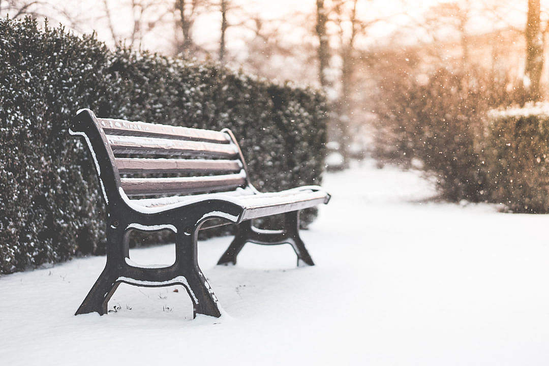 Download Bench in a Park and Snowy Weather FREE Stock Photo