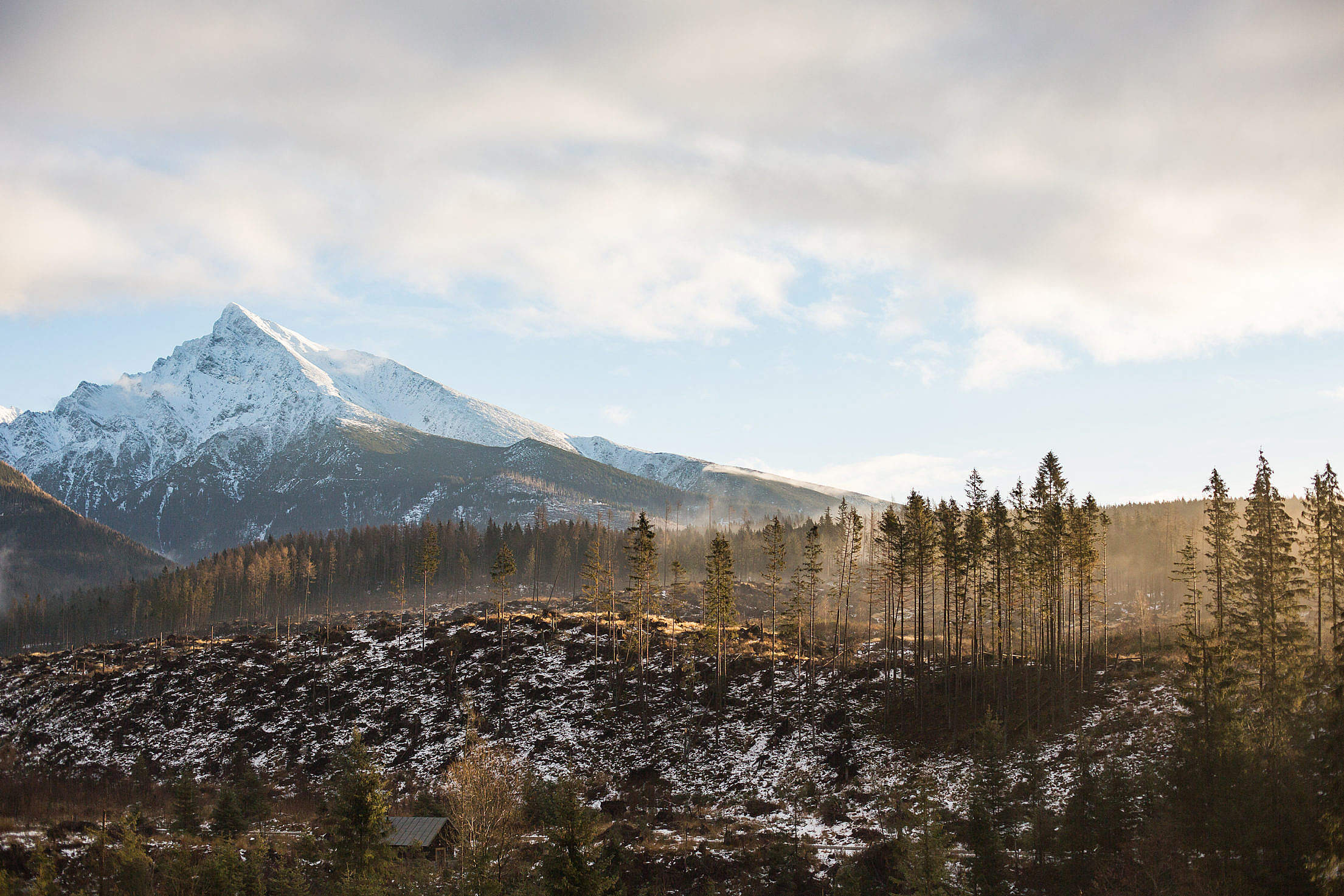 Big Mountain and Morning Woods Scenery Free Stock Photo