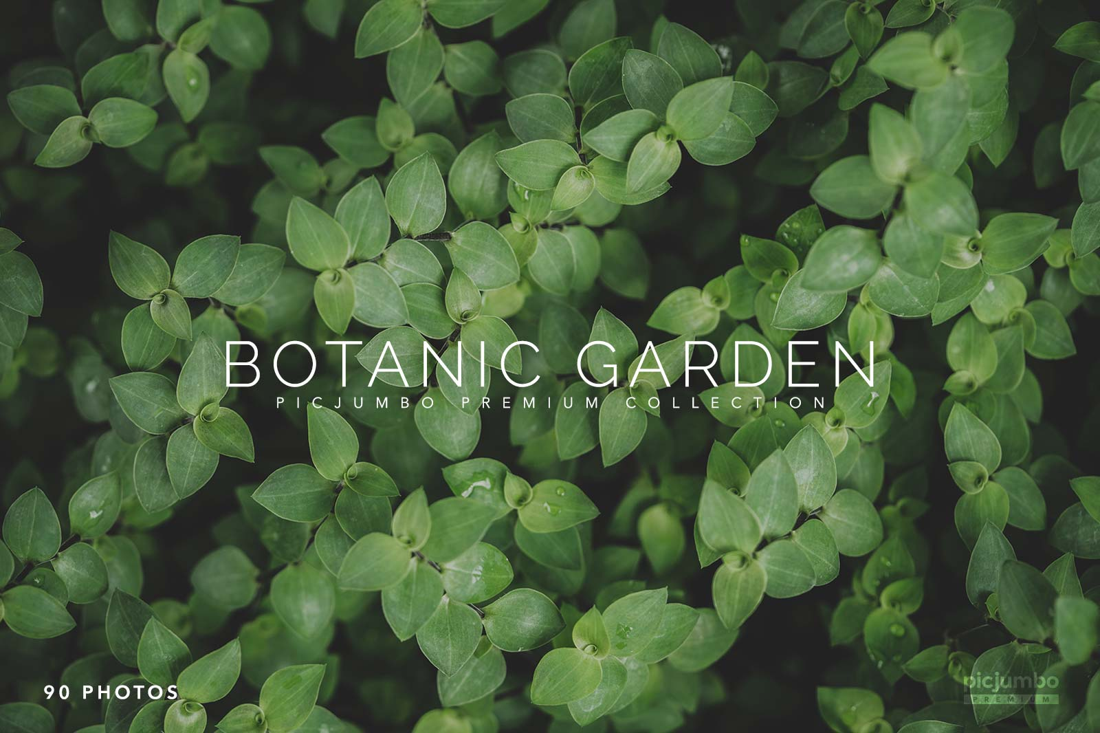 Click here to see Botanic Garden PREMIUM Collection!