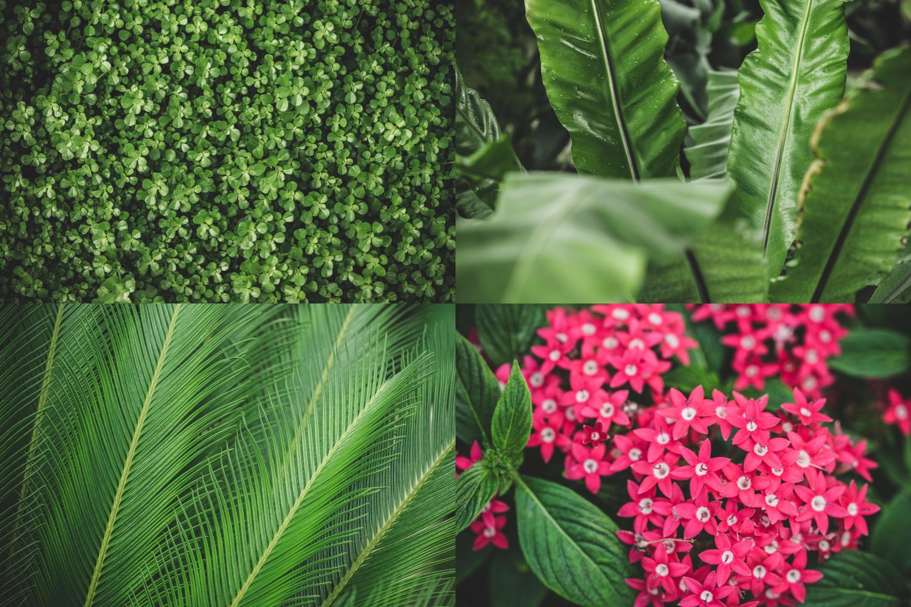 botanic garden preview 2
