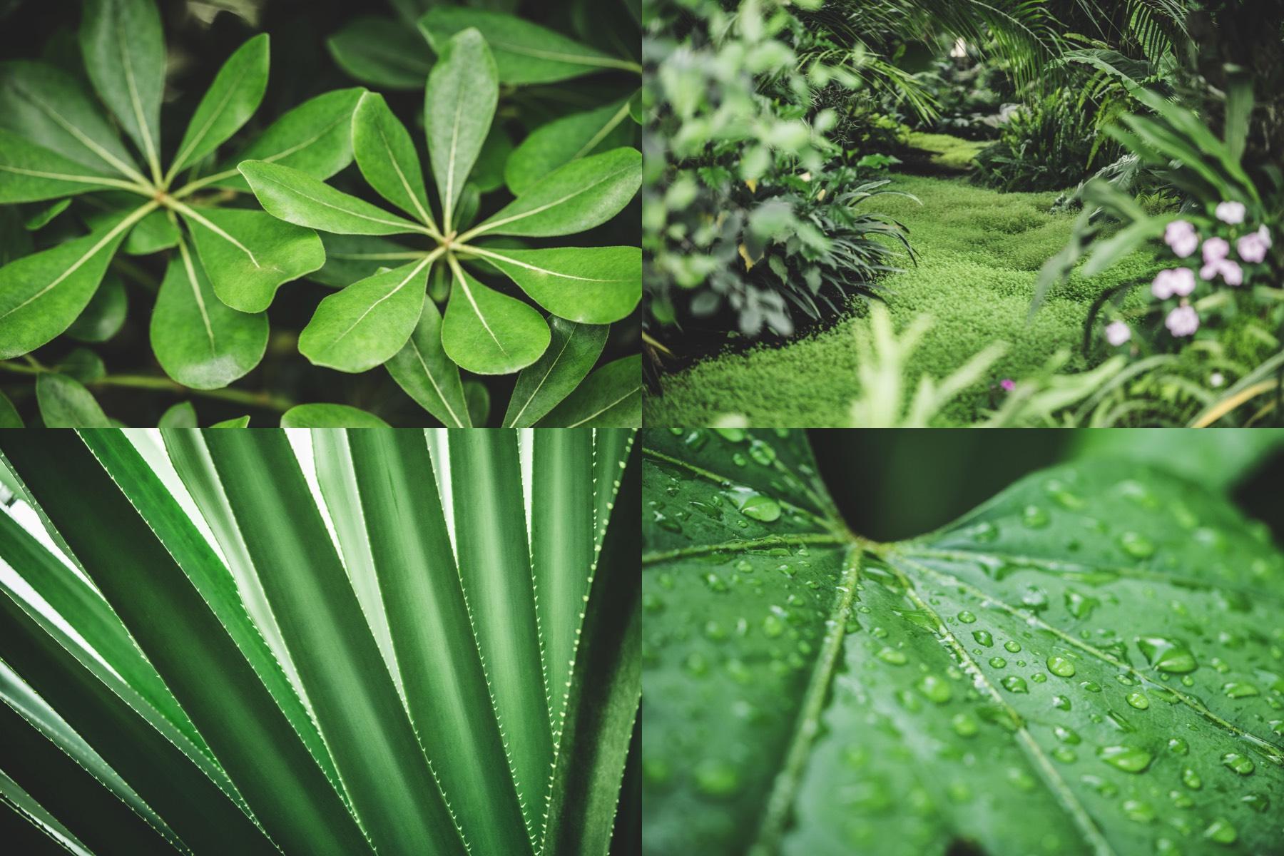 botanic garden preview 3