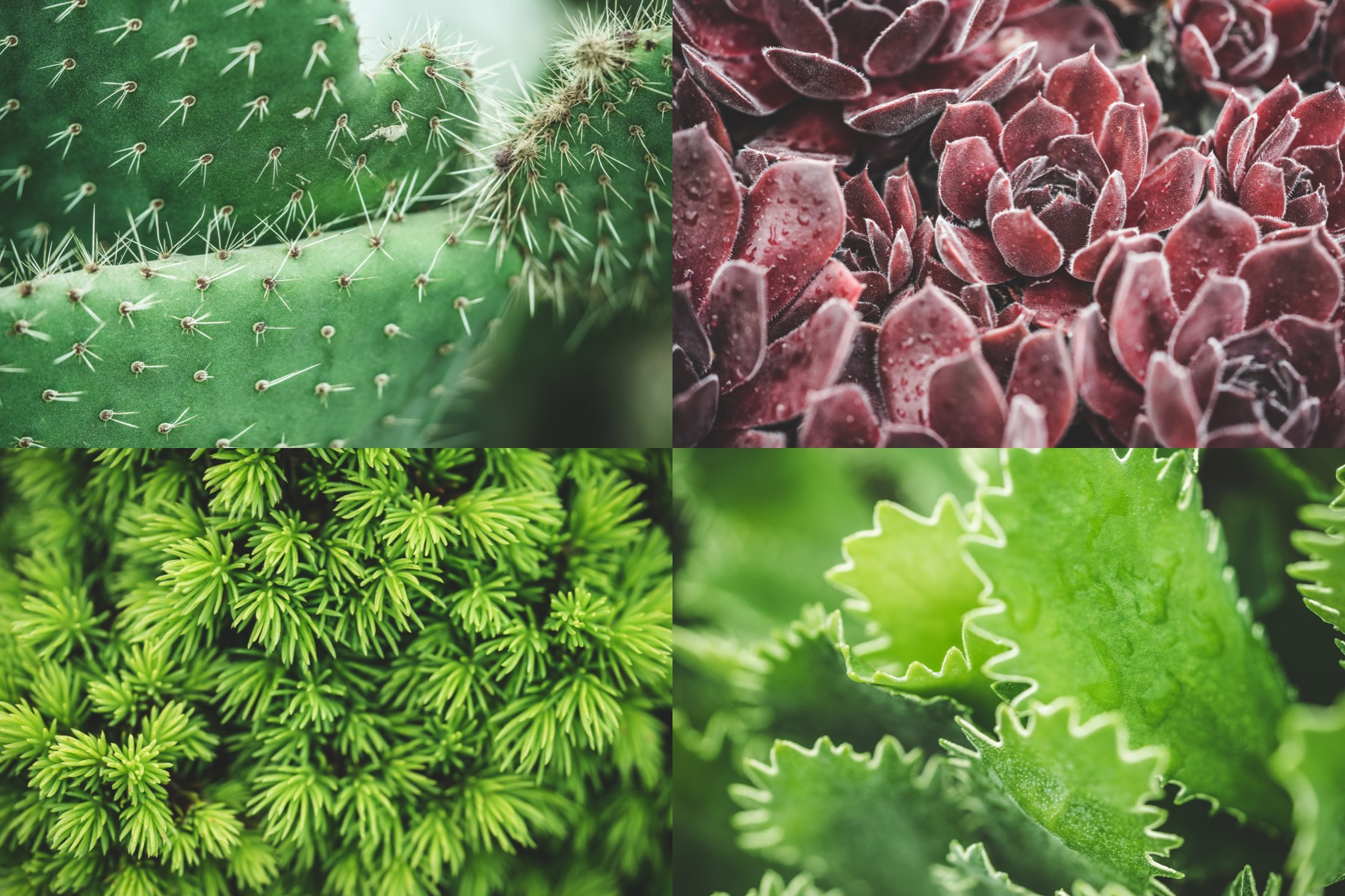 botanic garden preview 4