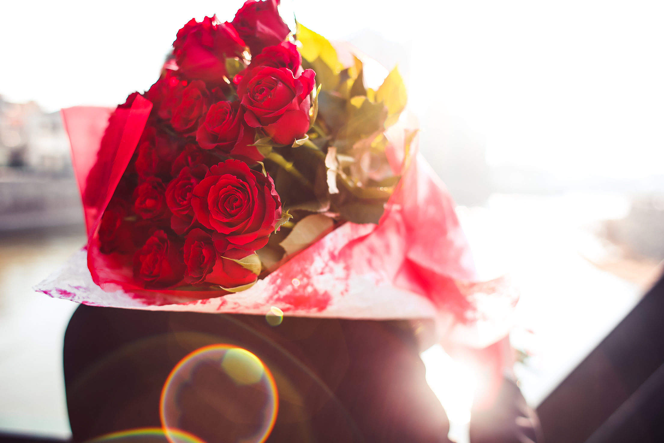 Bouquet of Roses in Sunbeams Free Stock Photo