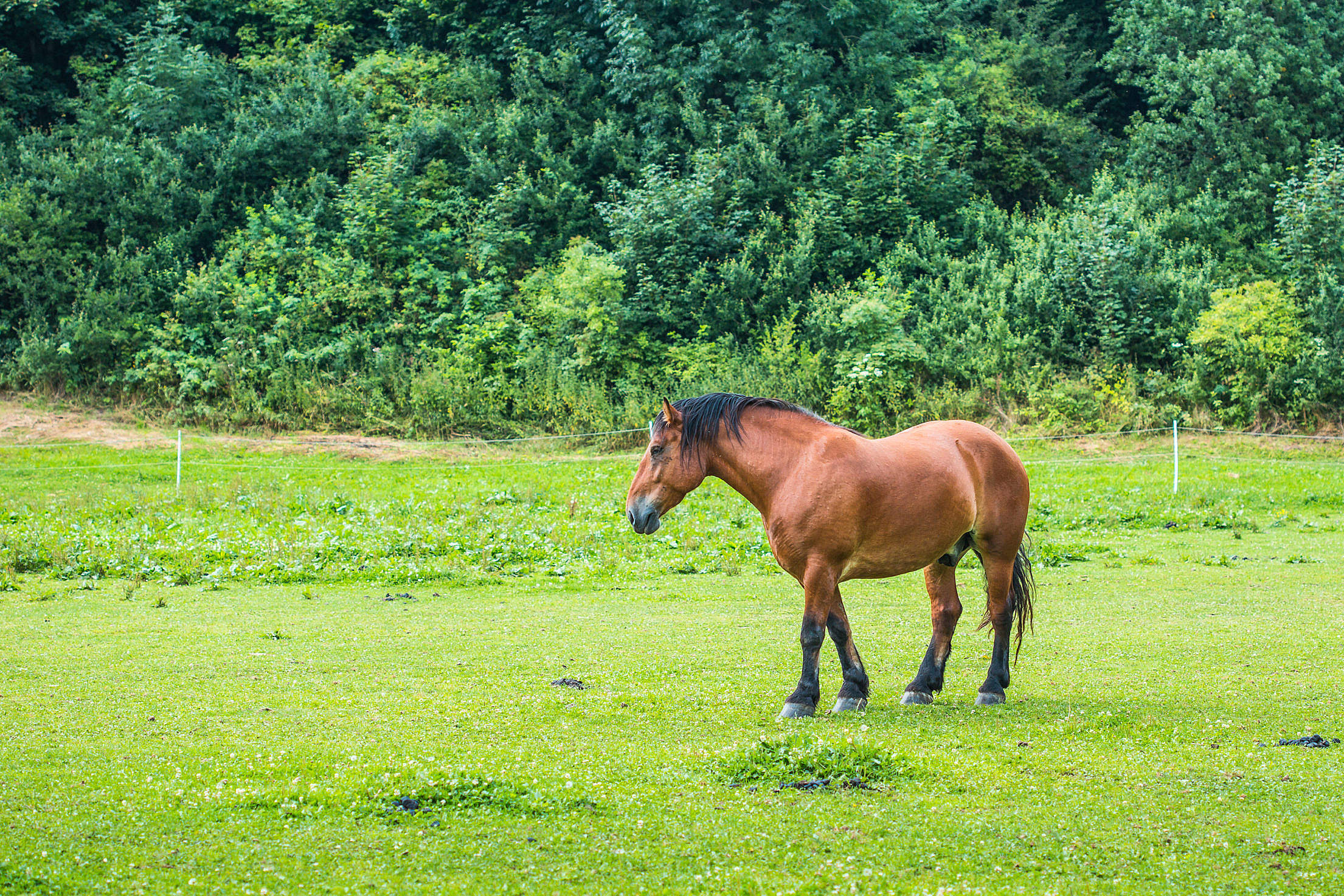 Brown Horse in a Meadow Free Stock Photo