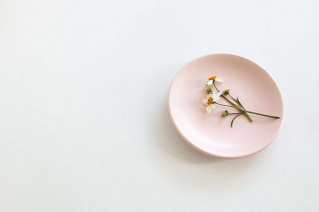 Download Chamomile Flowers on a Pink Plate FREE Stock Photo