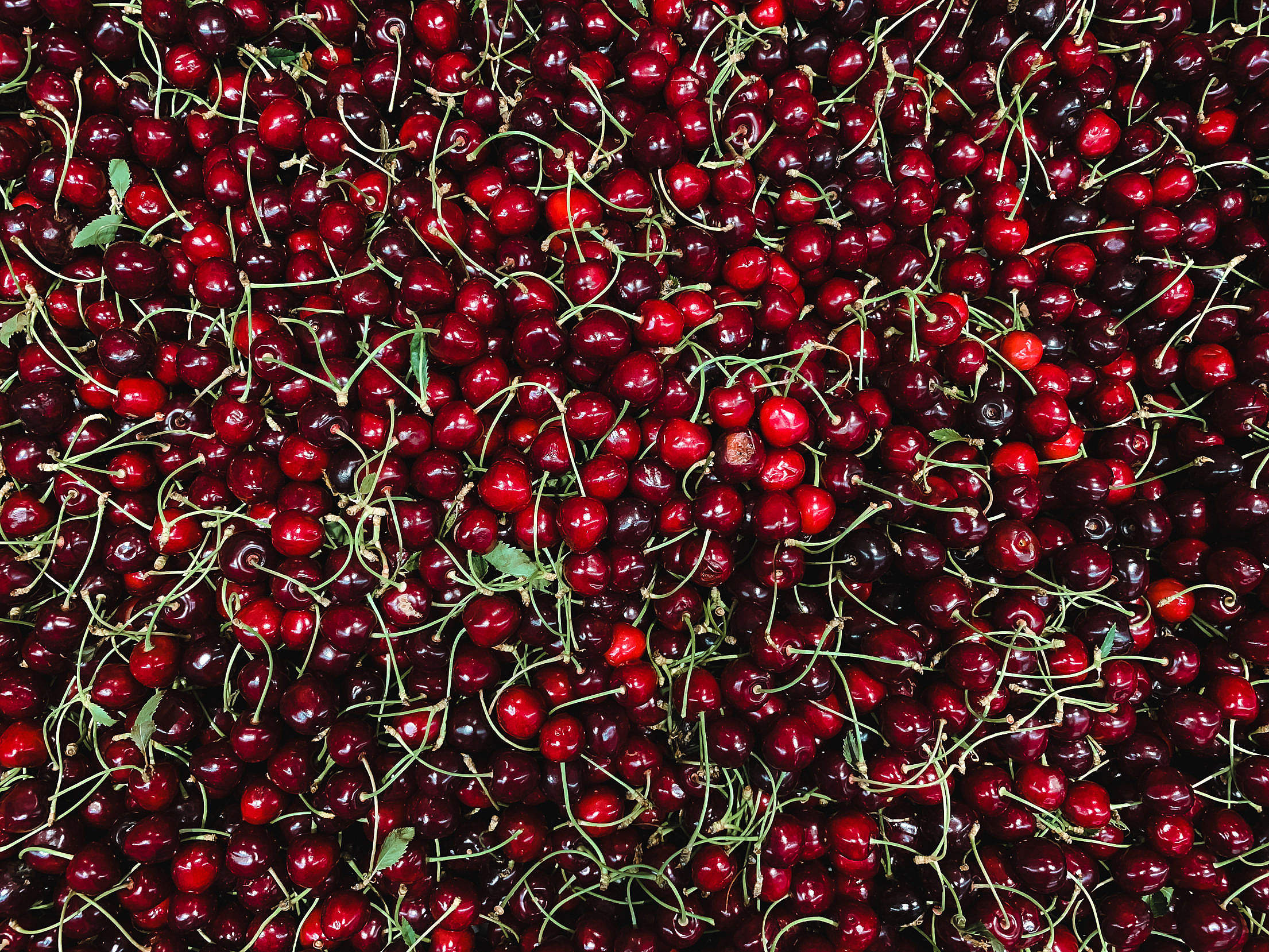 Download Cherries Pattern Free Stock Photo