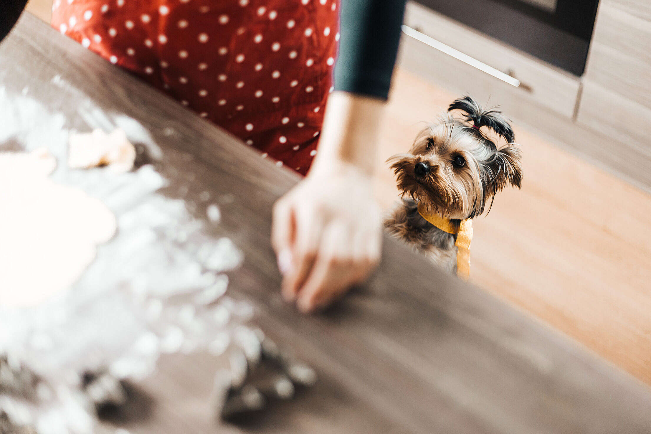 Download Christmas Baking: Our Little Helper Free Stock Photo