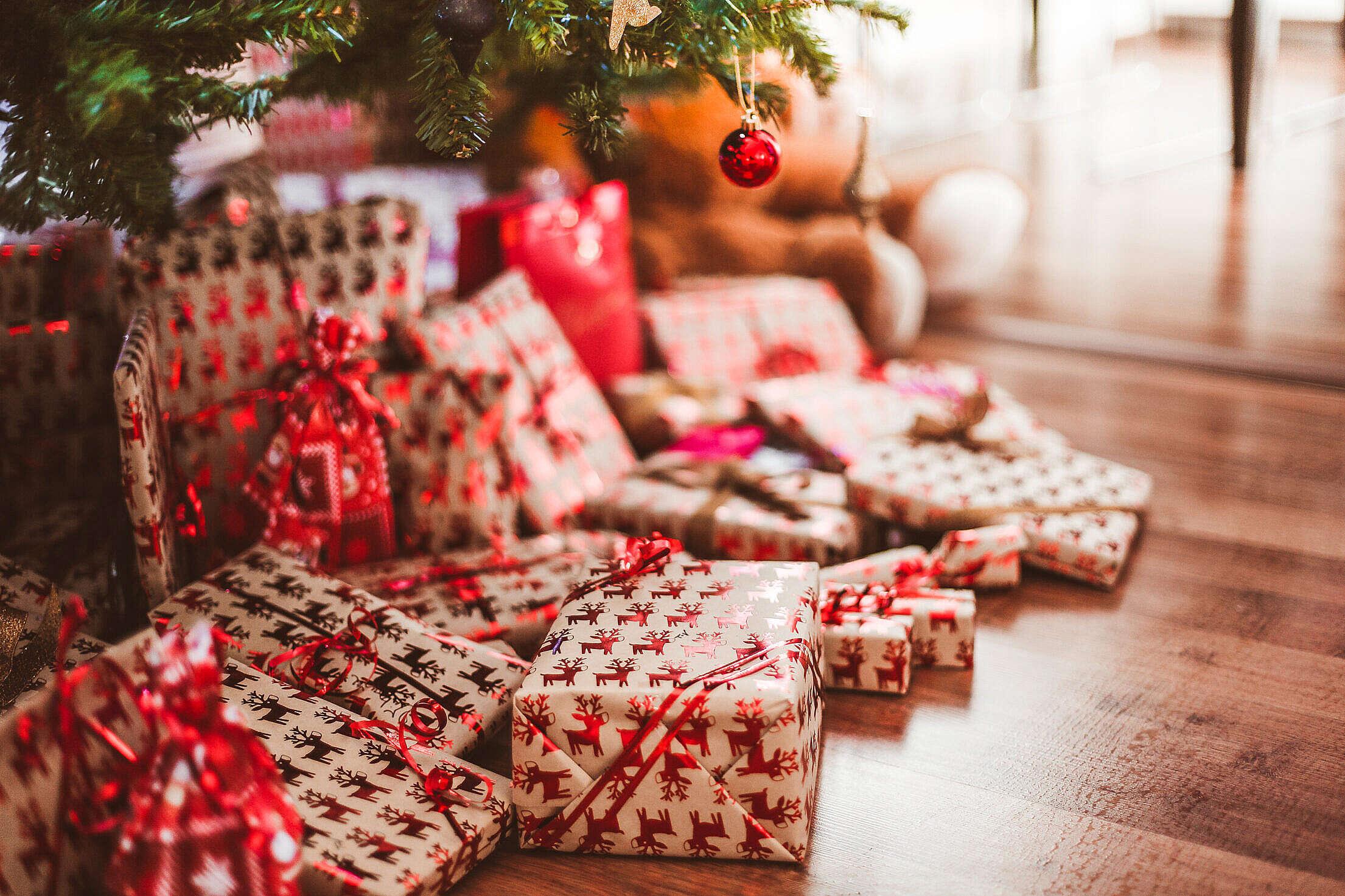 Christmas Presents Under Tree Free Stock Photo