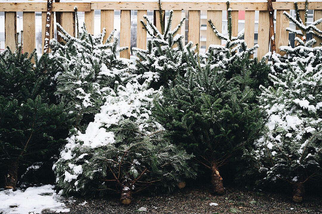 Download Christmas Tree Shop FREE Stock Photo