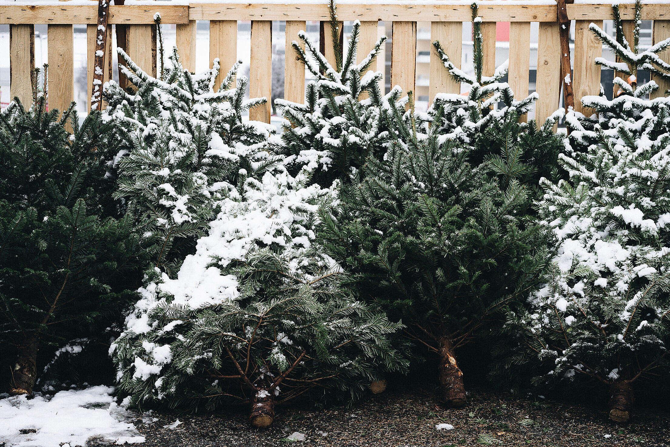 Christmas Tree Shop Free Stock Photo