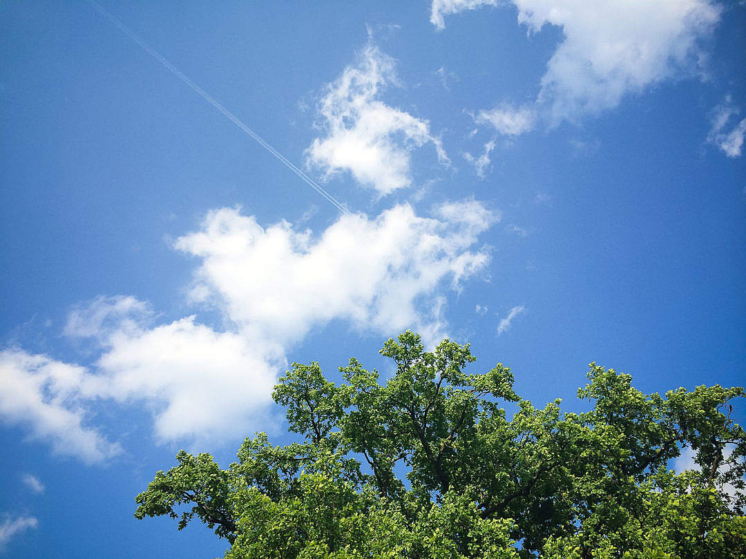 Download Clouds with Tree FREE Stock Photo