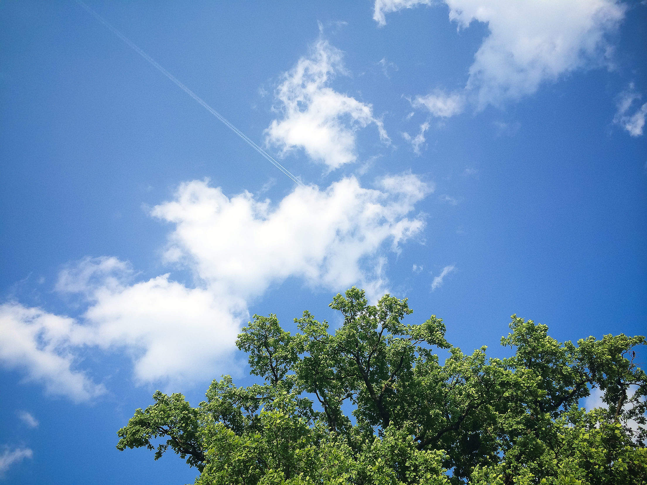 Clouds with Tree Free Stock Photo