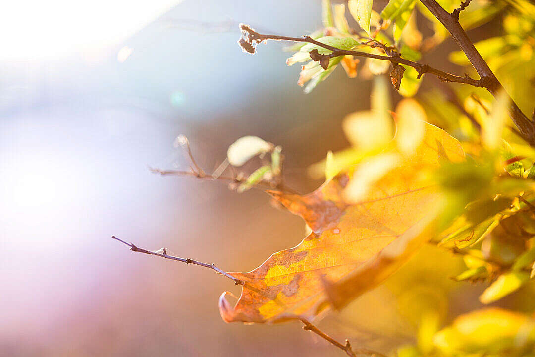 Download Colorful Autumn Leaves FREE Stock Photo