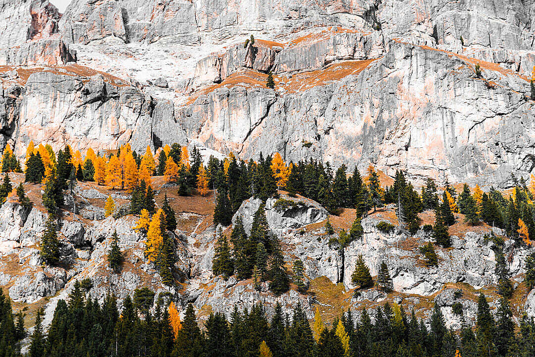 Download Colorful Fall Trees on a Rock FREE Stock Photo